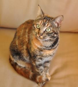 Il mondo di MaMaglia - La gatta Sofia